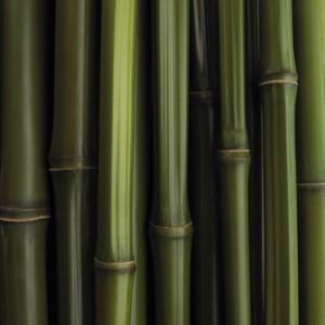vetement bambou