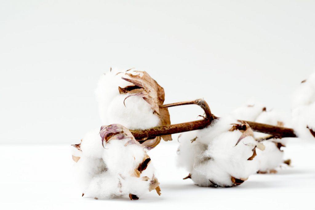 Fleur de coton prête à être filée pour faire de la fibre naturelle végétale