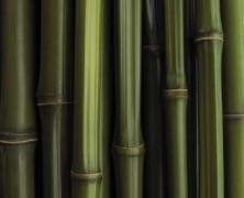 Vêtements bio en bambou